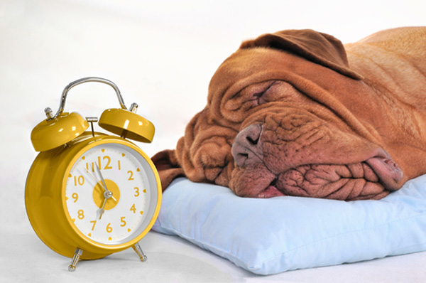 Image result for pets with clock